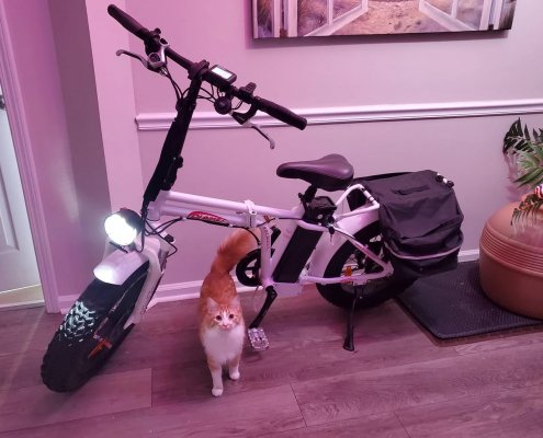 Headlamp upgraded by customer (and cat) unknown